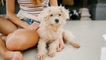 pexels-julia-volk-etudiante avec son chien - Les raisons d'adopter un animal en coloc